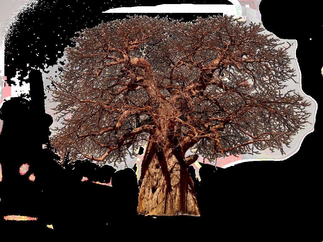 tree-3427359_1280